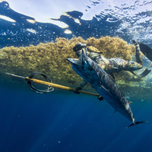 wahoo sargassum gulfstream spearfishing freediving