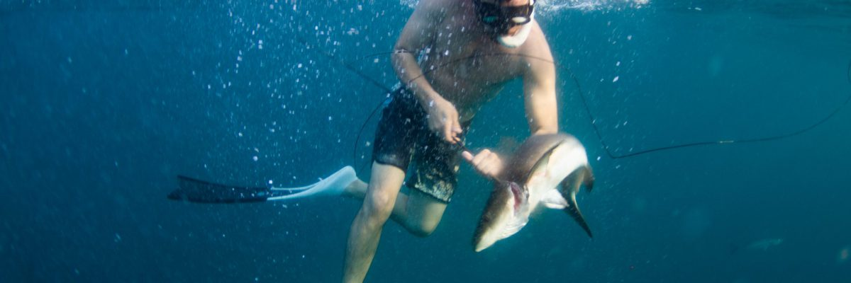 spearfishing freediving cobia braining